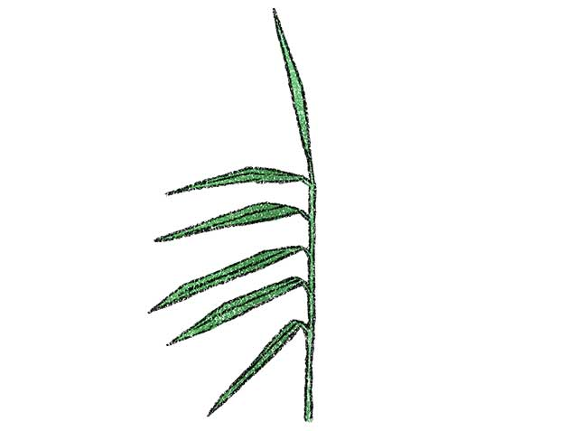 国府の片葉の葦(あし)
