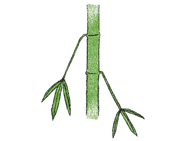 鳥屋野の逆竹(さかさだけ)